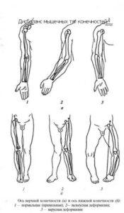 Механика тела - взгляд массажиста!